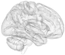 3D Brain Image
